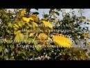 Елена Артамонова - Не любовь, а лихорадка (Марина Цветаева)