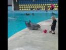 Дельфин играет с мальчиком
