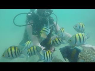 Sharjah diving