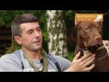 Гладиаторы собачьего мира Американский пит буль терьер