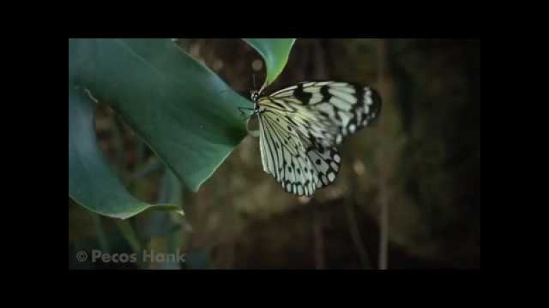 Завораживающий полет бабочки