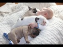 Cute Babies Sleeping With Dogs - Dog Loves Baby Videos 2017