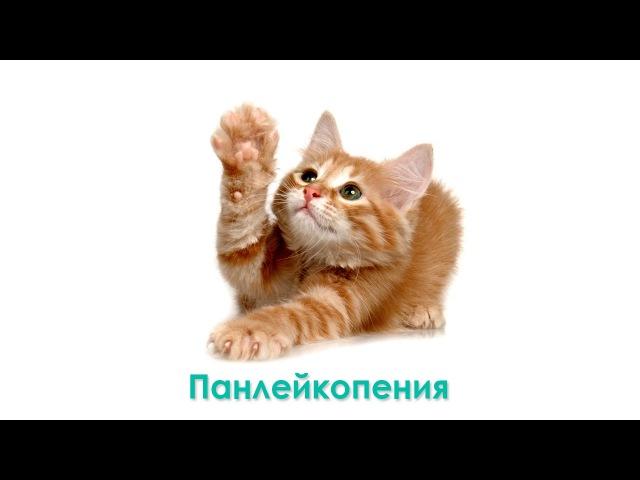Панлейкопения. Чумка у кошек. Ветеринарная клиника Био-Вет.