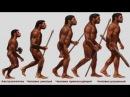 Происхождение человека и разума рассказывает Станислав Дробышевский