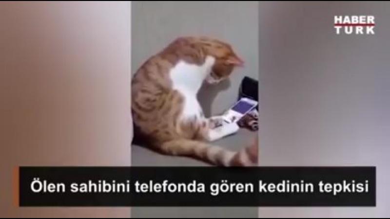 """Huzur İslamda on Instagram @huzurislamda ✔ Hayvanlardan öğrenecek çok şeyimiz var insanlık gibi Mesud @mesudcetinkaya ✔"""""""