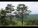 Удивительная природа Приморья (Amazing nature of Primorye)