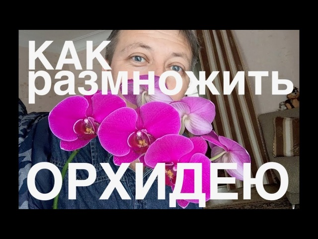 Как вырастить детку орхидеи на сломанном цветоносе
