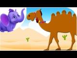 Alice The Camel - Nursery Rhyme with Karaoke