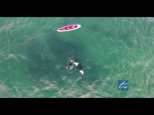 Orca Encounter with a Kayaker Army Bay