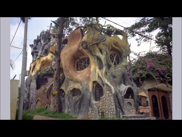 Причудливые деревья мира