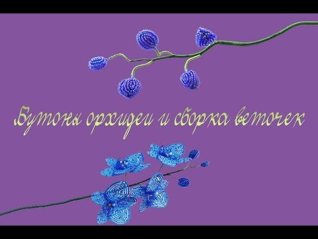 Бутоны орхидеи и сборка веточек/Buds of orchids and the assembly of twigs