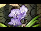Обзор новых орхидей.Как поживает Ванда и Дендрофаленопсис из фласки.