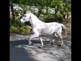 И-го-го, моя лошадка #crazy_vdk