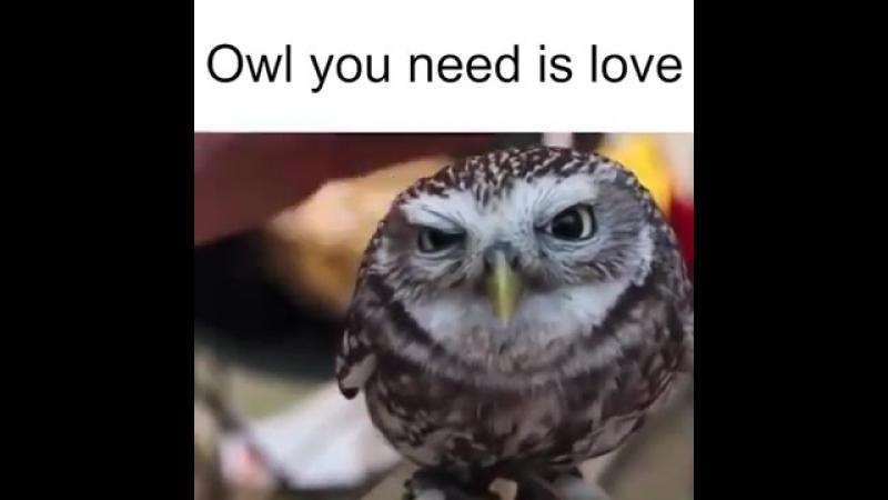Ainoa mitä tarvitset on ❤