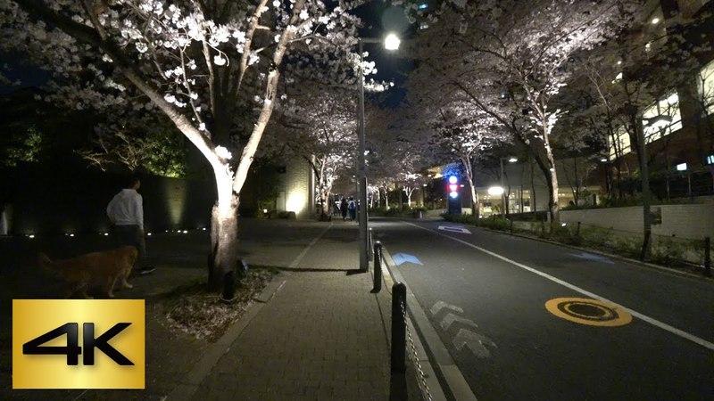 🌸TOKYO CHERRY BLOSSOM WALK 2018 Roppongi Sakurazaka Up Night 六本木さくら坂 上り 夜桜 4K