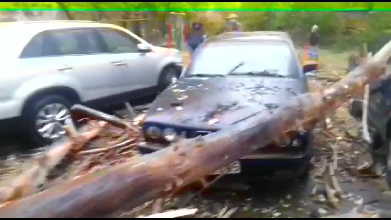 Талдыкорган. Упало дерево на машину.