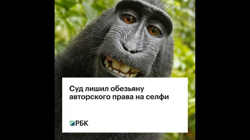 Суд лишил обезьяну авторского права на селфи