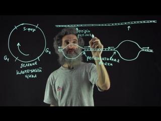 Цитология. Лекция 55. Репликация ДНК.
