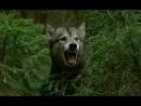 Граница Таёжный роман Схватка с волком