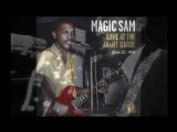 Magic Sam It s All Your Fault 1965