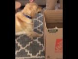 Собакен знакомится с новым другом