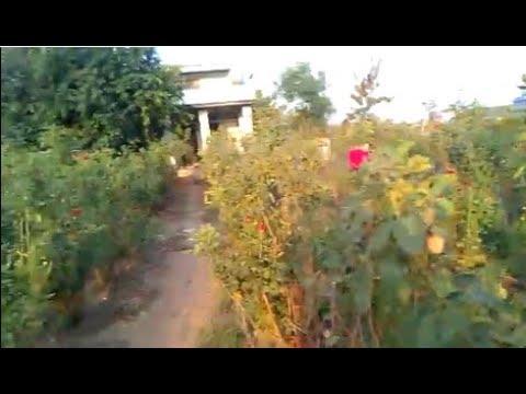 Путешествие по Индии с Марией Карпинской. Город Манви. Плантация роз. Как растут перец чили и гранат