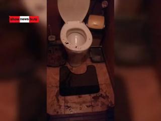 #Хорёк выжил в канализации и вылез из #унитаз'а