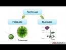 10 Ботаника наука о растениях Разнообразие и значение растений