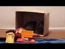 Приколы с кошками , Кошка играет с игрушками видео 25