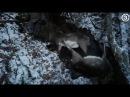 Собаки загрызли 40 ланей в оленьем парке Jaundzirnavnieki в Латвии.