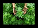 CANNABIS BOOK Total DAWNSHIFTING or the Full UPGRADE promo