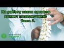 На работу каких органов влияет позвоночник? часть 2