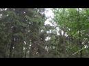Проливной дождь в лесу Шум дождя Звук дождя Релакс Медитация Сон Для души Для детей