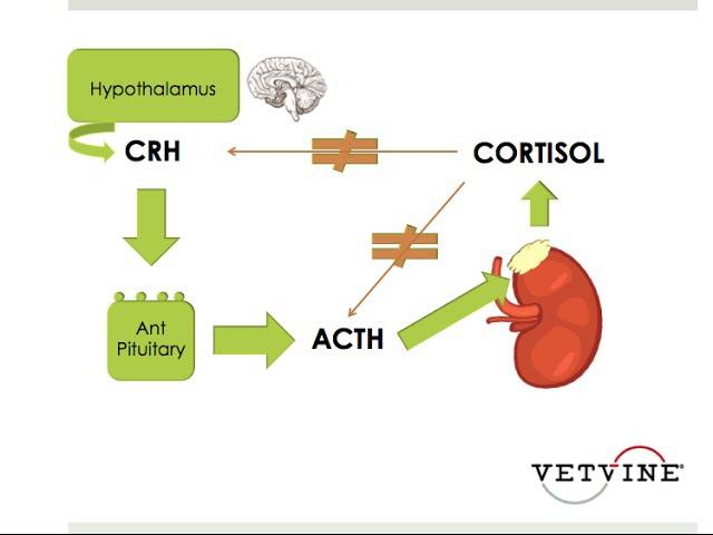 Кортикостероидная недостаточность у критических пациентов. Круглый стол / CIRCI - The Evidence Based Update Roundtable Discussion
