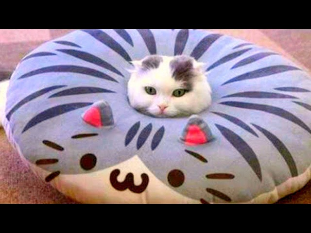 Приколы с Котами Смешные коты и кошки 2017 14 Смешное Видео Корпорация Зла смотреть онлайн без регистрации