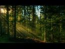 Шум леса Пение птиц Звуки природы 10 часов релакса и успокоения