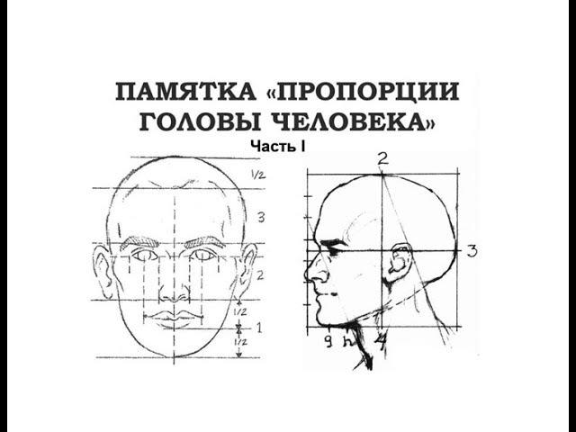 Пропорции головы. Часть 1. Поэтапное рисование портрета