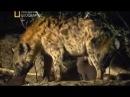 Доисторический мир Древние животные Гиенодон Документальный фильм National Geograpfic