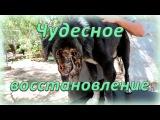 Чудесное спасение и восстановление собаки ┃ Rescue dog