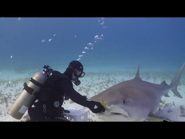 С.Савельев. Акулы и вкусные, полезные моряки.