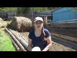 Как избавиться от муравьев с помощью обычной манки. (06.18г.) Семья Бровченко.