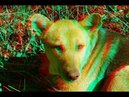Winter Spring 3D Changing the cold to heat 3D Anaglyph Super 3d video