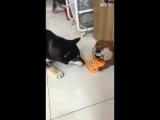 Китайцы разыгрывают собаку