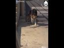 Спасение бездомной собаки