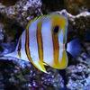 Морской аквариум | Рыбки | Кораллы | Альметьевск
