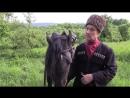 Асланбек Султанович Мирзоев. История Кабардинской породы лошадей.