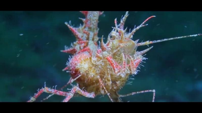 Трейлер документального фильма Заповеданное море » Freewka.com - Смотреть онлайн в хорощем качестве