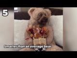 Смешные животные _ Топ-10  (август 2017) _ Funny Pet Videos