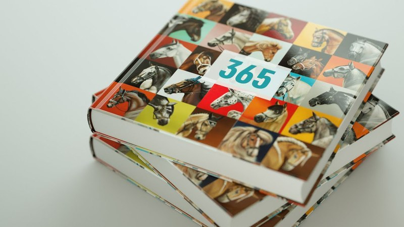 Indiegogo campaign. Artist. 365 horse portraits in 365 Days.