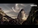 The Enturance Exouler Inspiration Original Mix Extrema Global Promo Vide